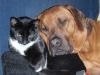 karina_og_gaius_hygger_med_katten